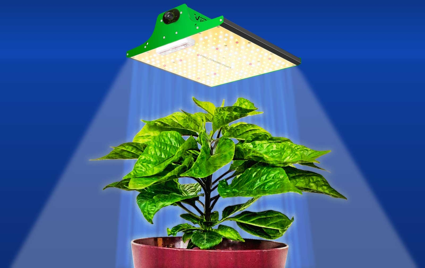 Photo of a VIPARSPECTRA grow light lighting a young hot pepper plant